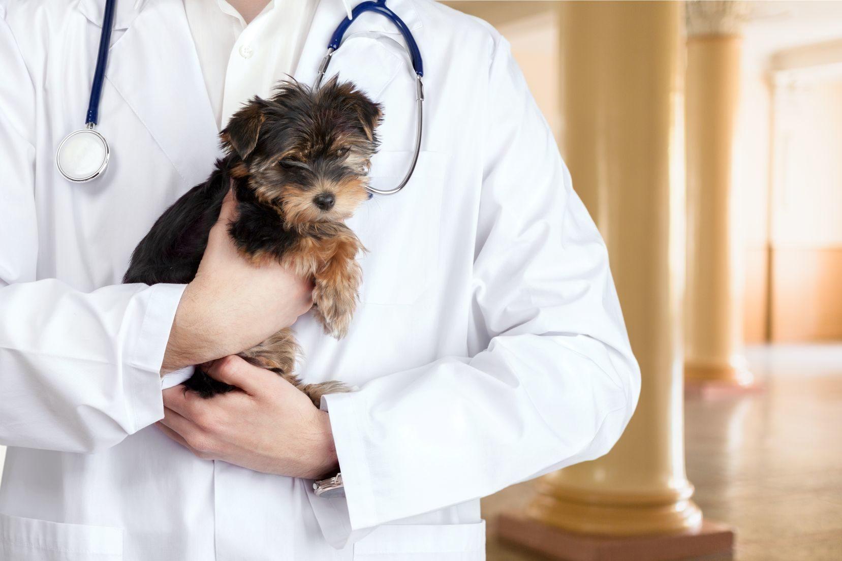 Accueil - Clinique Vétérinaire des Coquelicots