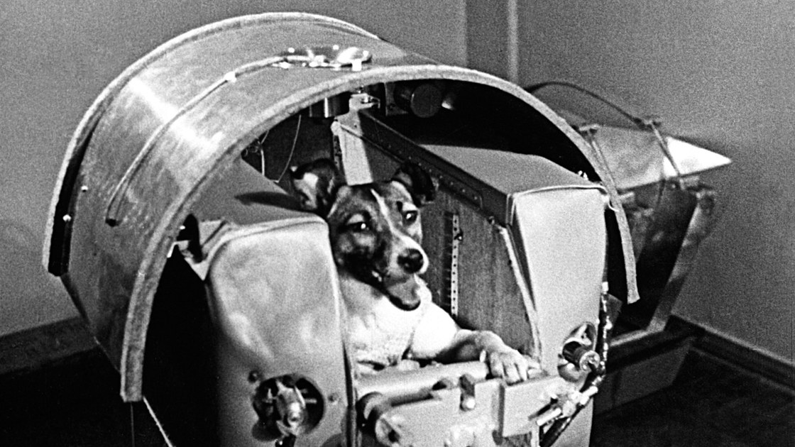 Laika_chien-espace.jpg