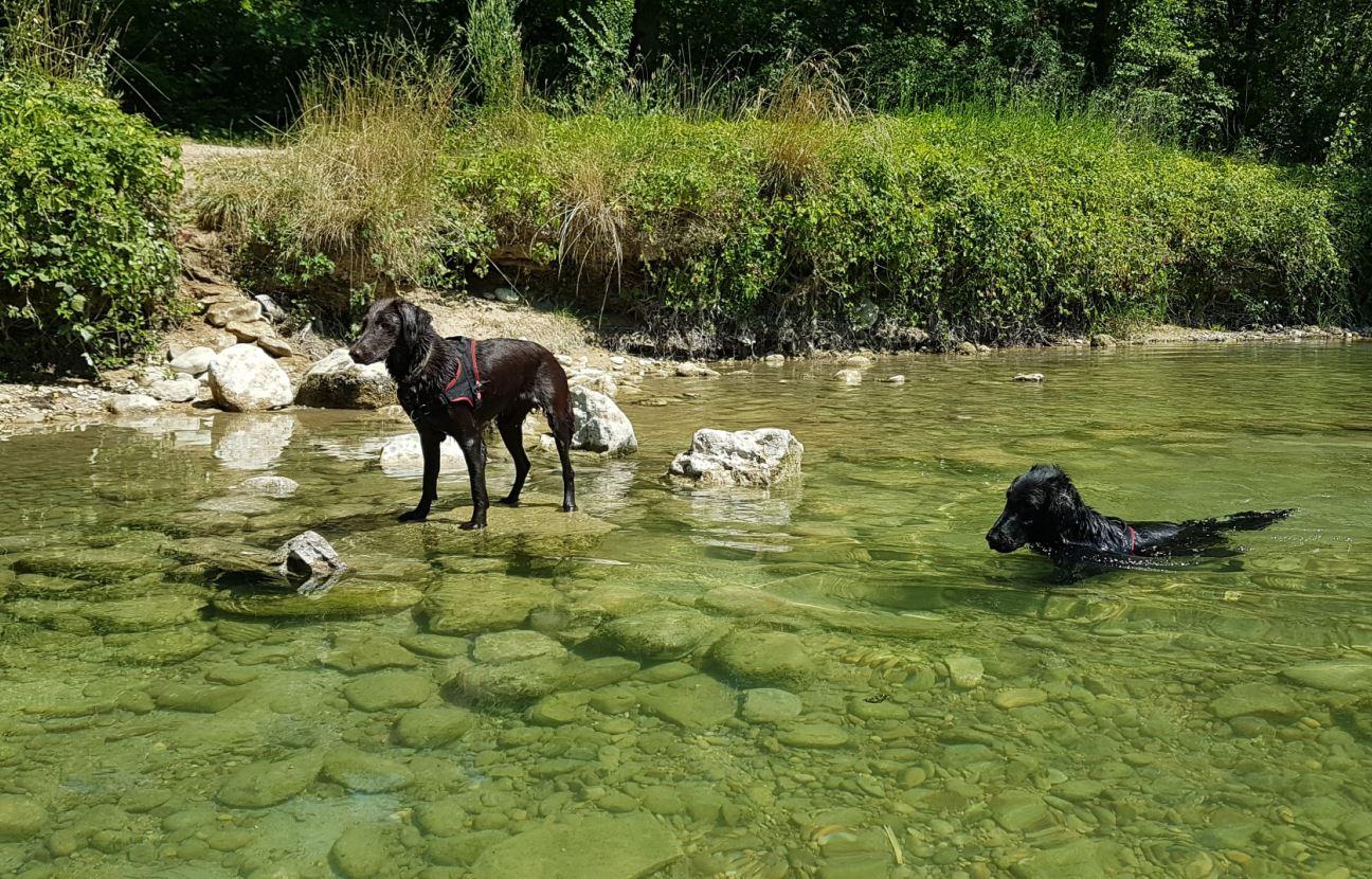 Les cyanobactéries prolifèrent en été surtout pendant les grosses chaleurs.