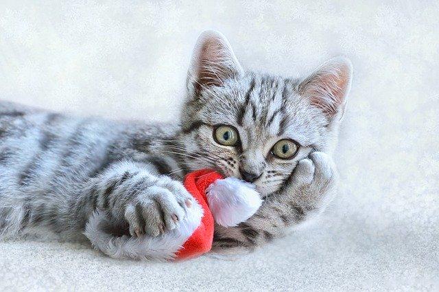 cat-3871896_640.jpg